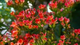κόκκινος μικρός λουλο&upsi Στοκ Φωτογραφίες