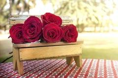 Κόκκινος μπροστινός χορτοτάπητας τριαντάφυλλων Στοκ εικόνες με δικαίωμα ελεύθερης χρήσης