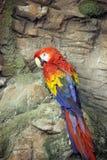 Κόκκινος μπλε παπαγάλος Ara Μακάο Στοκ φωτογραφίες με δικαίωμα ελεύθερης χρήσης