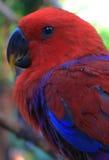 Κόκκινος παπαγάλος Στοκ εικόνες με δικαίωμα ελεύθερης χρήσης