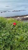 κόκκινος παφλασμός Στοκ φωτογραφία με δικαίωμα ελεύθερης χρήσης