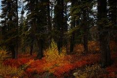 Κόκκινος πορτοκαλής κίτρινος σε Denali στοκ φωτογραφία με δικαίωμα ελεύθερης χρήσης