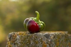 Κόκκινος-πράσινο φθινόπωρο πιπεριών Στοκ Εικόνες