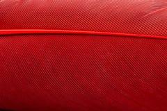 Κόκκινος στενός επάνω φτερών στοκ φωτογραφία με δικαίωμα ελεύθερης χρήσης