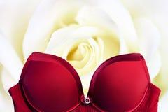 Κόκκινος στηθόδεσμος στο ροδαλό υπόβαθρο λουλουδιών στοκ φωτογραφία
