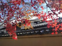 Κόκκινος σφένδαμνος στο Κιότο στοκ φωτογραφία