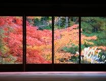 Κόκκινος σφένδαμνος με την Ιαπωνία από το παράθυρο Στοκ Εικόνες