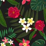 κόκκινος τροπικός λουλ Frangipani Φοίνικας, φύλλα monstera διανυσματική απεικόνιση