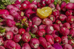 Κόκκινος - υγιής τρώγοντας χορτοφάγος Mooli - Στοκ εικόνα με δικαίωμα ελεύθερης χρήσης