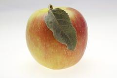 κόκκινος υγρός μήλων Στοκ φωτογραφία με δικαίωμα ελεύθερης χρήσης