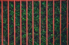 Κόκκινος φράκτης στον πράσινο τοίχο δέντρων στοκ φωτογραφίες