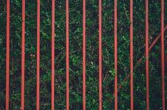 Κόκκινος φράκτης στον πράσινο τοίχο δέντρων στοκ φωτογραφία με δικαίωμα ελεύθερης χρήσης