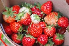 Κόκκινος φρέσκος φραουλών Στοκ Εικόνες