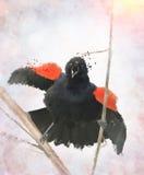 Κόκκινος φτερωτός κότσυφας Watercolor Στοκ εικόνα με δικαίωμα ελεύθερης χρήσης