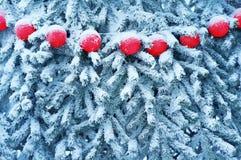 κόκκινος χειμώνας σφαιρών Στοκ Εικόνα