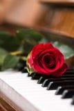 Κόκκινος όμορφος αυξήθηκε στο πληκτρολόγιο πιάνων Στοκ Εικόνες