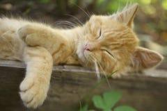 Κόκκινος ύπνος γατακιών στην καυτή σιέστα ημέρας στο φυτώριο κήπων στοκ φωτογραφία με δικαίωμα ελεύθερης χρήσης