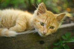 Κόκκινος ύπνος γατακιών στην καυτή σιέστα ημέρας στοκ φωτογραφία
