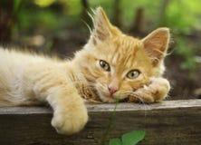 Κόκκινος ύπνος γατακιών στην καυτή σιέστα ημέρας στοκ φωτογραφίες