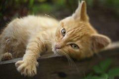 Κόκκινος ύπνος γατακιών στην καυτή σιέστα ημέρας στοκ εικόνα με δικαίωμα ελεύθερης χρήσης
