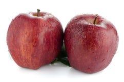 κόκκινος ώριμος μήλων Στοκ Εικόνες