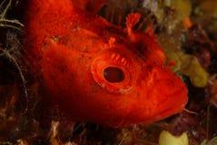 Κόκκινος Στοκ εικόνα με δικαίωμα ελεύθερης χρήσης