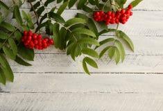 Κόκκινος ashberry σε ένα άσπρο υπόβαθρο Στοκ Εικόνες