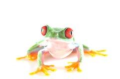 Κόκκινος eyed βάτραχος δέντρων στοκ εικόνες με δικαίωμα ελεύθερης χρήσης