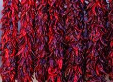Κόκκινου aristra τσίλι Στοκ Φωτογραφία