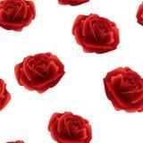 Κόκκινο άνευ ραφής σχέδιο τριαντάφυλλων σε ένα άσπρο υπόβαθρο Στοκ Φωτογραφίες