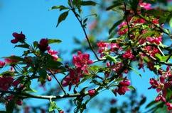 Κόκκινο άνθος Στοκ εικόνες με δικαίωμα ελεύθερης χρήσης