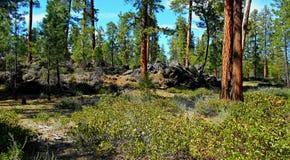 Κόκκινο δάσος φλοιών Στοκ Φωτογραφίες