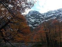 κόκκινο δάσος Στοκ Φωτογραφία