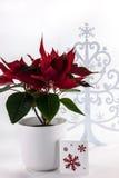 Κόκκινο άσπρο Snowflake Poinsettia δέντρο στοκ εικόνα