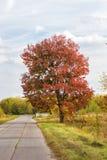 Κόκκινο δέντρο φθινοπώρου και ένας δρόμος των πιάτων Στοκ εικόνες με δικαίωμα ελεύθερης χρήσης