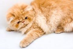 Κόκκινο λίγη γάτα στο υπόβαθρο Στοκ Φωτογραφίες