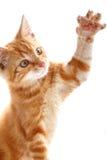 Κόκκινο λίγη γάτα Στοκ εικόνες με δικαίωμα ελεύθερης χρήσης