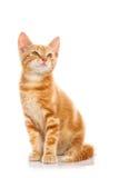 Κόκκινο λίγη γάτα Στοκ φωτογραφίες με δικαίωμα ελεύθερης χρήσης