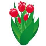 Κόκκινο απομονωμένο τουλίπες αντικείμενο ελεύθερη απεικόνιση δικαιώματος