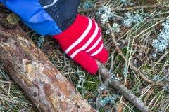 Κόκκινο γάντι Να πάρει το ραβδί στη δασική κινηματογράφηση σε πρώτο πλάνο Στοκ Φωτογραφία