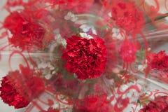 κόκκινο γαρίφαλων Στοκ εικόνα με δικαίωμα ελεύθερης χρήσης