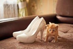 Κόκκινο γατακιών Κόκκινο γατακιών Κόκκινο γατακιών Στοκ Εικόνα