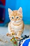 κόκκινο γατακιών Στοκ εικόνα με δικαίωμα ελεύθερης χρήσης