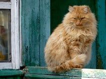 κόκκινο γατών Στοκ φωτογραφία με δικαίωμα ελεύθερης χρήσης