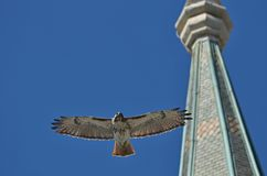 Κόκκινο γεράκι ουρών που πετά στα ύψη ενάντια σε έναν σαφή μπλε ουρανό στοκ φωτογραφία με δικαίωμα ελεύθερης χρήσης