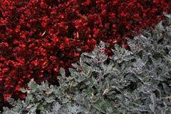Κόκκινο γκρι δυαδικότητας αντίθεσης λουλουδιών Στοκ Εικόνα