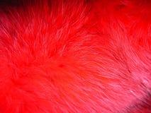 κόκκινο γουνών αλεπούδω& Στοκ Φωτογραφία