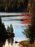 Κόκκινο δέντρο σφενδάμνου ont ο απότομος βράχος Στοκ Φωτογραφίες