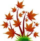κόκκινο δέντρο φύλλων εικ Στοκ Φωτογραφίες