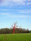 κόκκινο δέντρο Στοκ εικόνα με δικαίωμα ελεύθερης χρήσης